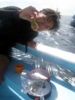 タオ島ダイビング もっちゃんおたべ