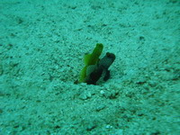 タオ島 ダイビング ペアギンガ
