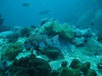 タオ島 ダイビングログ チュンポンピナクル