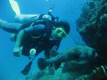 タオ島 ダイバー ネズミフグ