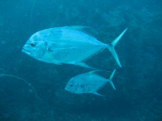 チュンポンピナクル(タオ島 ダイビング)