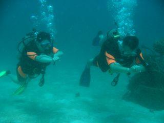 アドバンスコース (タオ島 ダイビング)