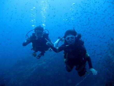 タオ島 ダイビング ダイバー 講習