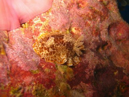 タオ島 魚 ウミウシ 名前不明
