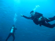 タオ島 ダイビング バラクーダ ダイバー