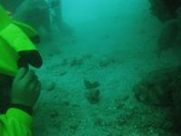 タオ島ダイビング ピカチュウ