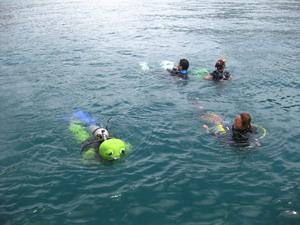 タオ島ダイビング キグルミダイブ
