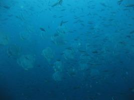 タオ島ダイビング セイルロック チムニー