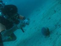 タオ島 ダイビング 水中カメラ