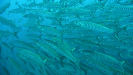 タオ島 ダイビング サウス/ポッタリー