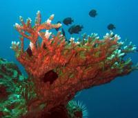 fish04_convert_20110603191054.jpg