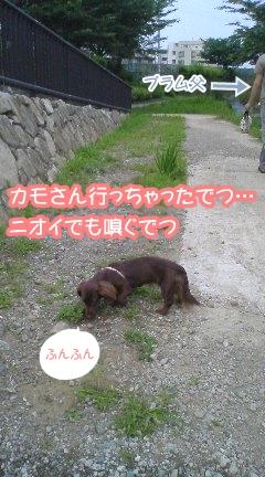 plum69.jpg