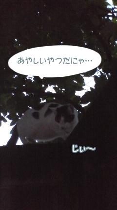 plum74.jpg