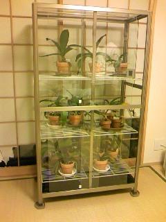 室内温室完成