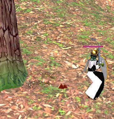 木の実ぼろぼろ