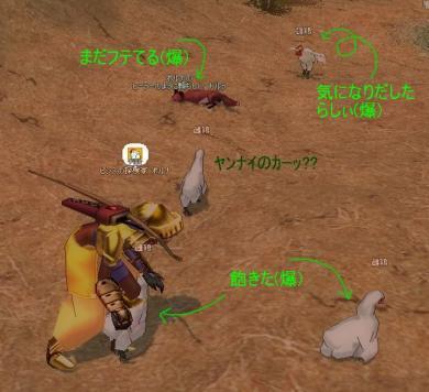 鶏とキツネ2