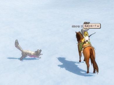 白いキツネさんとかいるし