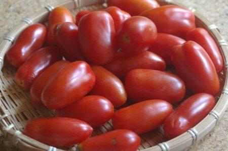 アイコというトマト