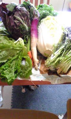 たーくさん野菜