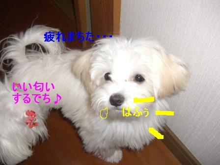 コピー ~ ぽにょ 143
