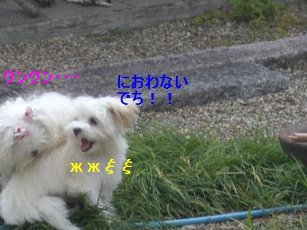 コピー (2) ~ ぽにょ 028