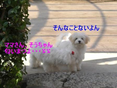 コピー ~ ぽにょ 404
