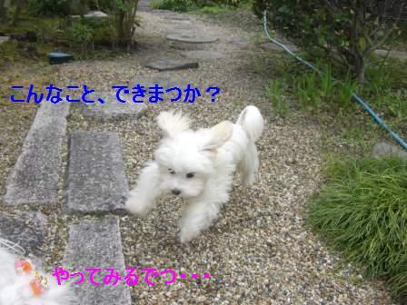 コピー ~ ぽにょ 417