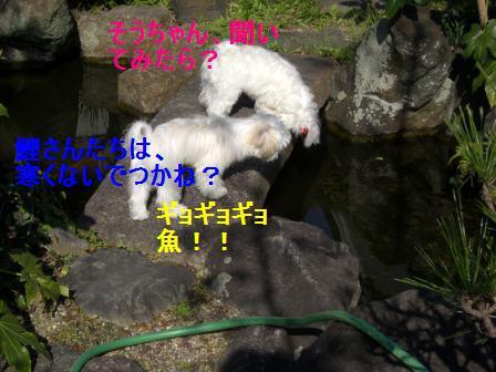 コピー ~ ぽにょ 422