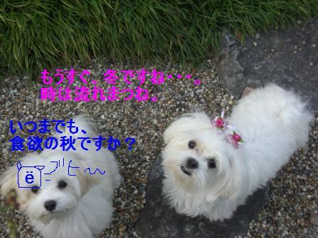 コピー (3) ~ ぽにょ 049