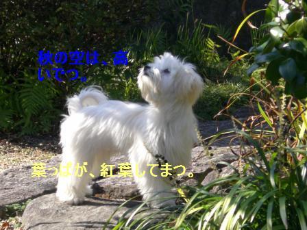 コピー (2) ~ ぽにょ 417
