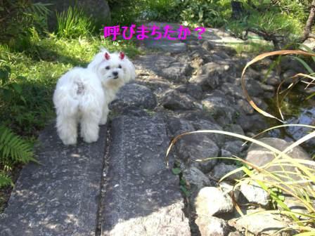 コピー (2) ~ ぽにょ 414