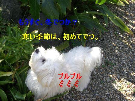 コピー (2) ~ ぽにょ 421