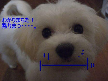 コピー ~ ぽにょ 759
