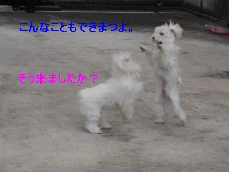 コピー ~ ぽにょ 804