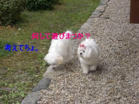 コピー ~ ぽにょ 712