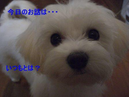 コピー (2) ~ ぽにょ 759