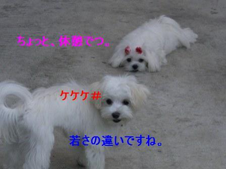コピー ~ ぽにょ 816