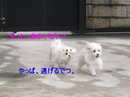 コピー ~ ぽにょ 847
