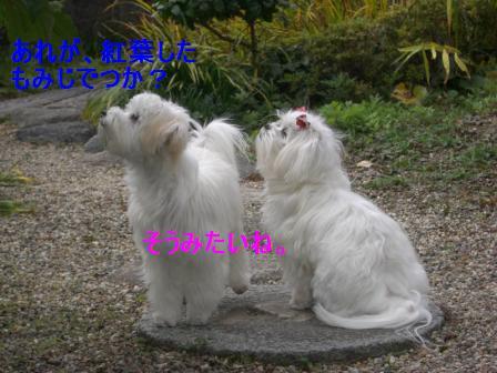 コピー ~ ぽにょ 940