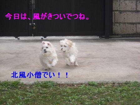 コピー ~ ぽにょ 901