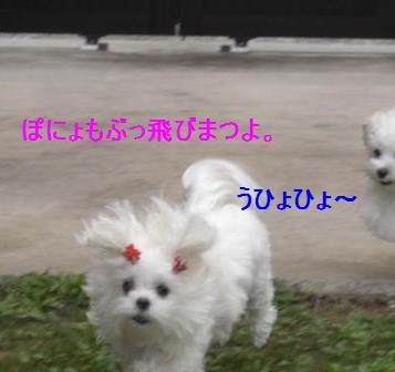 コピー ~ ぽにょ 903