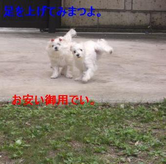 コピー ~ ぽにょ 898