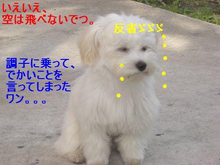 コピー ~ ぽにょ 981