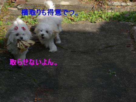 コピー ~ ぽにょ 485