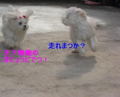 コピー ~ ぽにょ 009