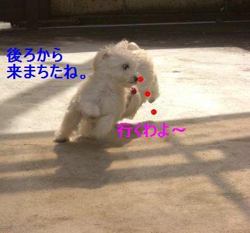 コピー ~ ぽにょ 010