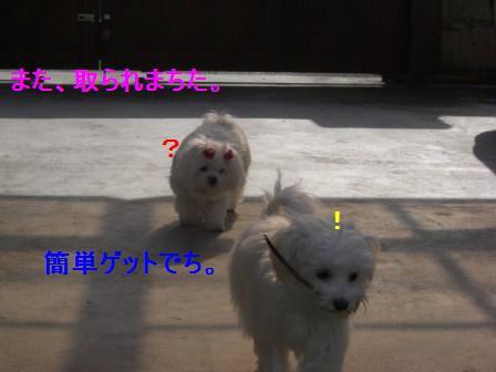 コピー ~ ぽにょ 053