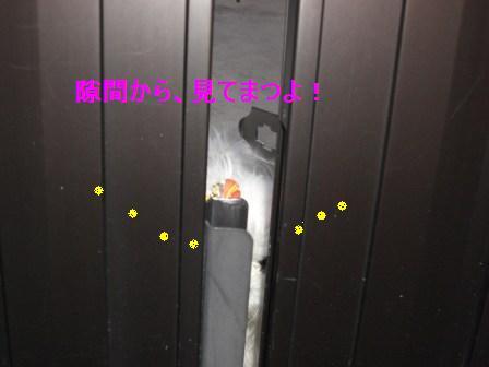 コピー ~ ぽにょ 352