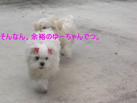 コピー ~ ぽにょ 438