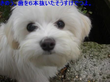 コピー ~ ぽにょ 466